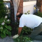 Garden maintenance services in Lytton Park from Gardenzilla