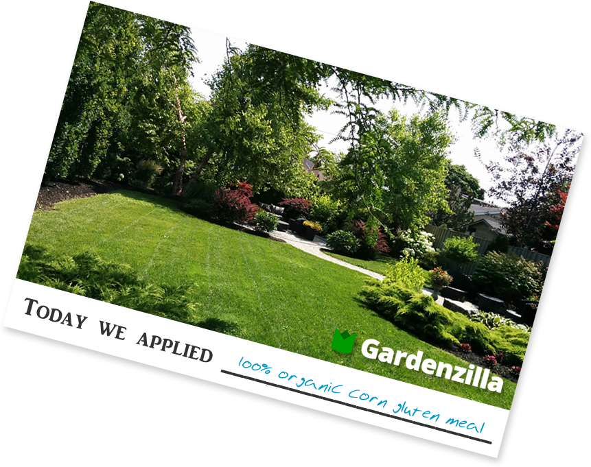 Brochure / handout for lawn fertilizer services from Gardenzilla in Midtown & North Toronto