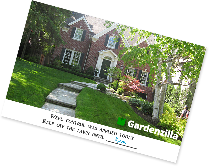 Weed control services for lawns from Gardenzilla in Midtown Toronto