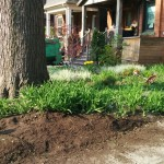 Before picture - Garden cleanup in the Annex by Gardenzilla