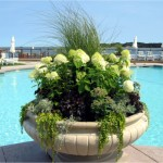Summer container / seasonal planter by Gardenzilla's Deborah Vivas