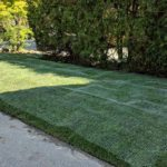Chicken wire on a new sod installation to prevent raccoons from turning over the soil