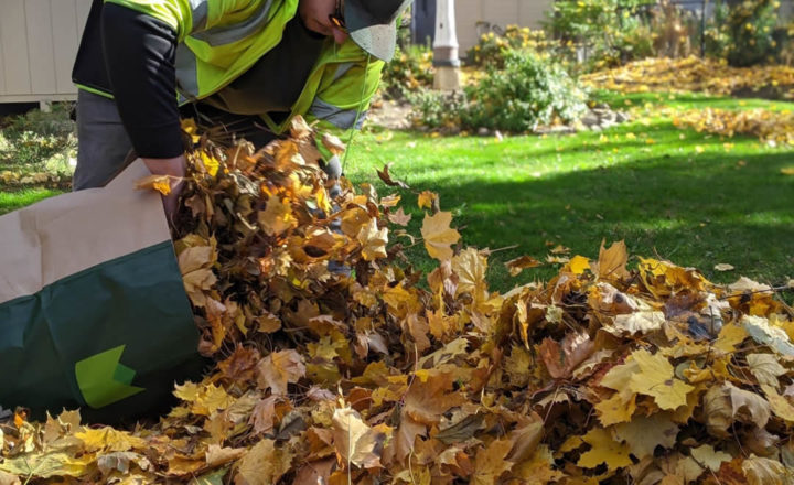 Wallace bagging leaves at a fall cleanup