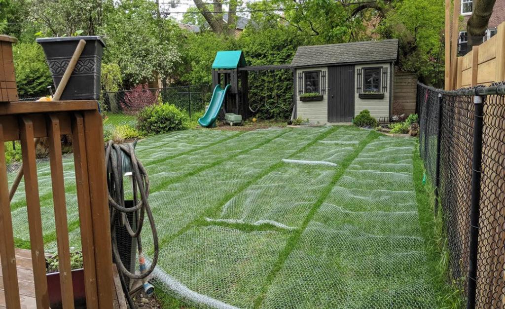 Back lawn, Leaside, sod installation by Gardenzilla
