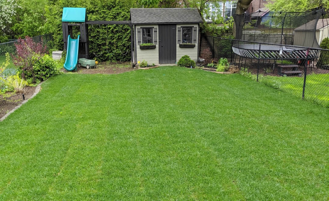 Back lawn, Leaside, sod installation by Gardenzilla