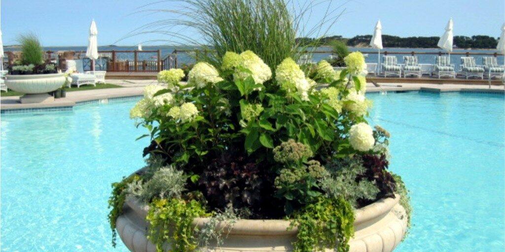 Summer container / seasonal planter by Gardenzilla's Deborah Vivas