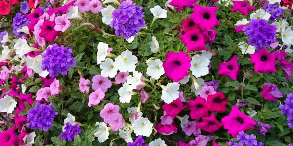 Spring flowers in a seasonal planter