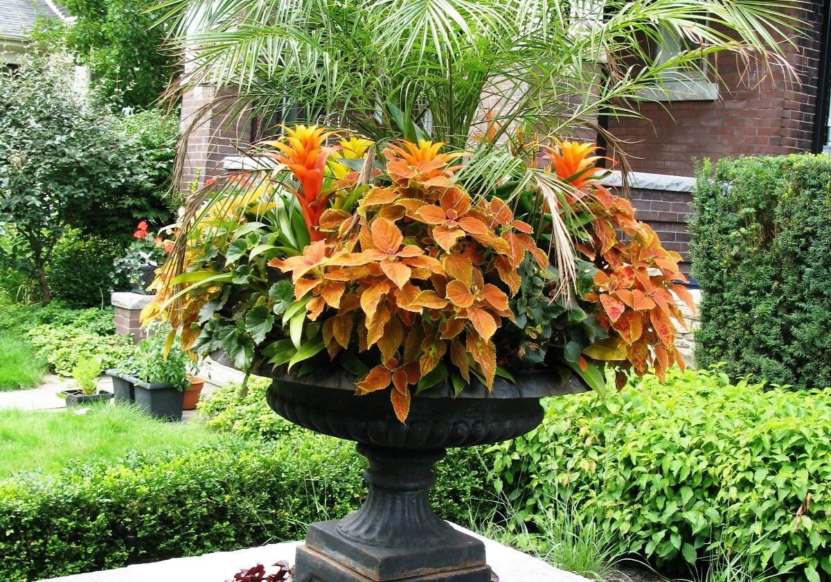A striking summer seasonal planter by Deborah Vivas (designer for Gardenzilla Lawn & Garden)