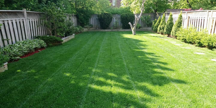 Lawn mowing client of Gardenzilla in Toronto