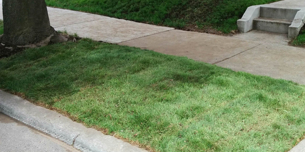 Sodding and seeding new lawns - a service from Gardenzilla lawn and garden in midtown Toronto